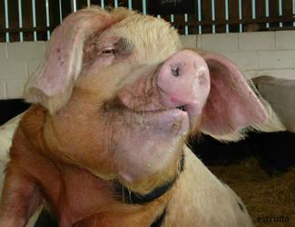 Gladys The Pig by Estruda