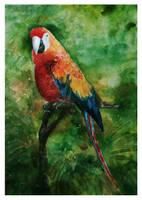Parrot by vBlackDevilv