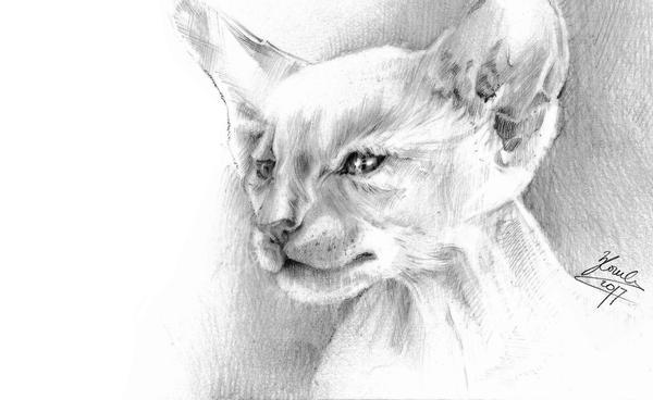 Cat by vBlackDevilv