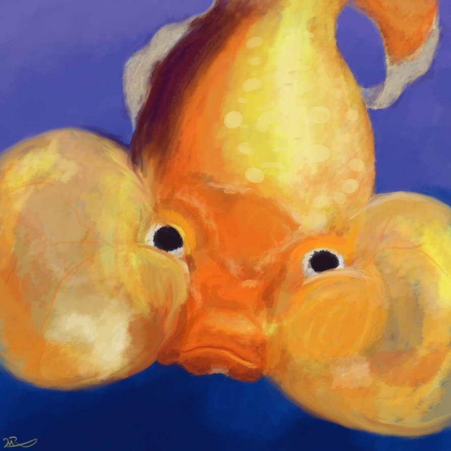 Bubble Eye Goldfish by MoonWhing