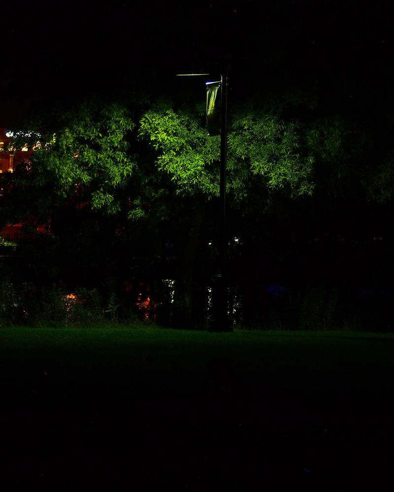 Park Tree by a Lamp by geeegnome