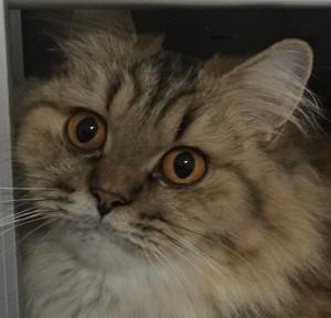 OreoCat14's Profile Picture