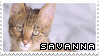 Savannah Cat | Stamp by PuniPlush