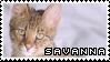 Savannah Cat | Stamp by PuniPlush
