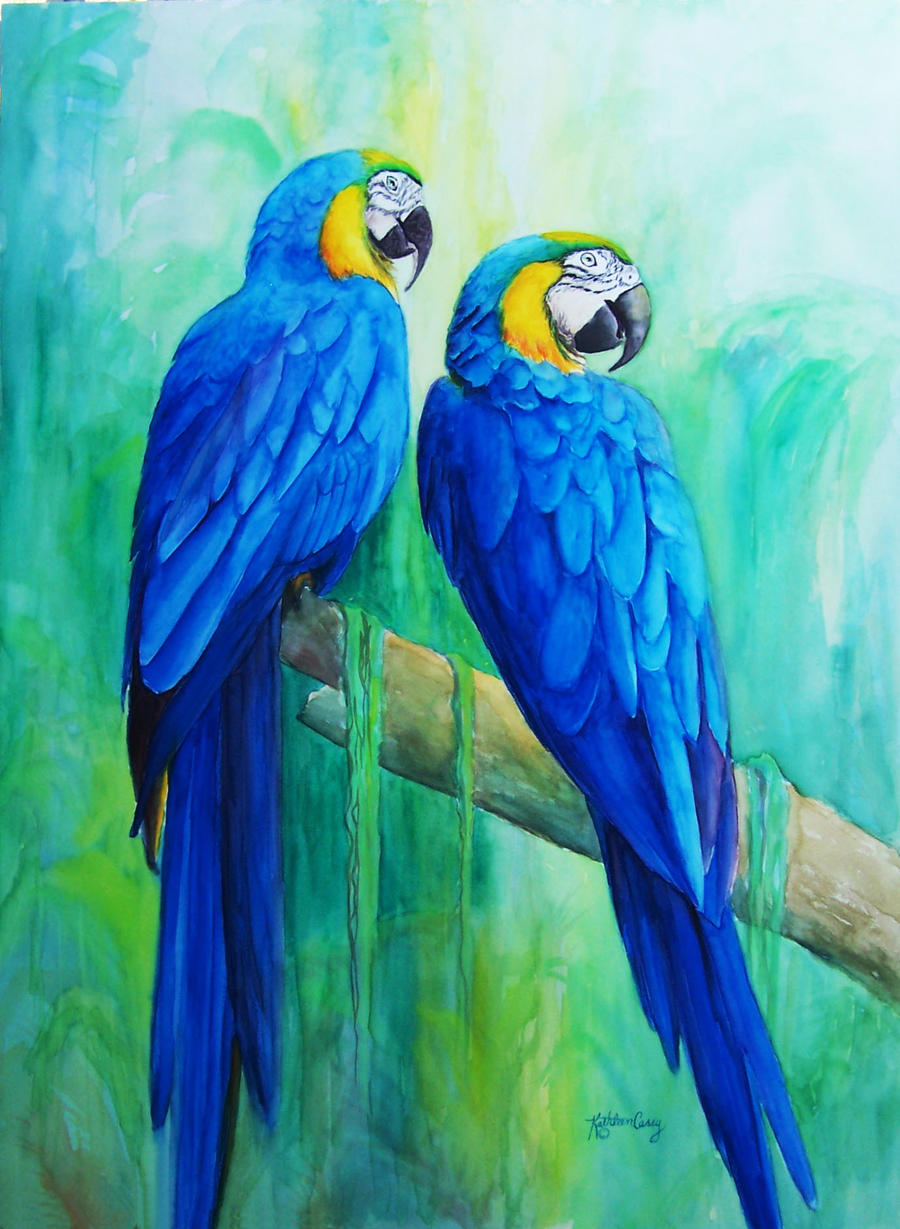 Blue Macaw Drawing Blue and Gold Macaws by