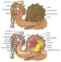 Lou Carcolh Internal Anatomy by EvolutionsVoid