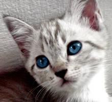 behind blue eyes by Cinnnamon