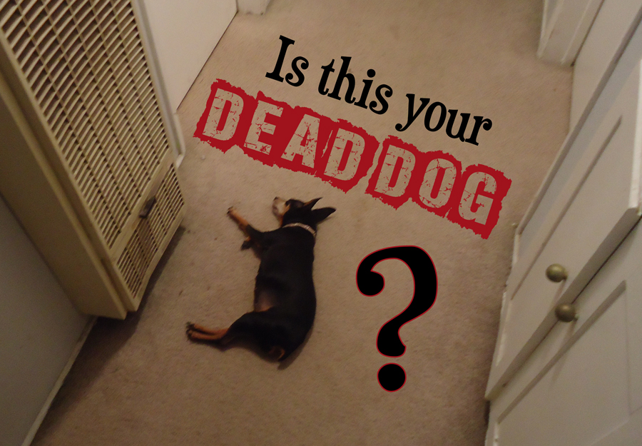 Dead Dog by Black-Ale on DeviantArt