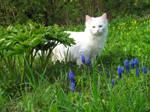 Cats' Garden