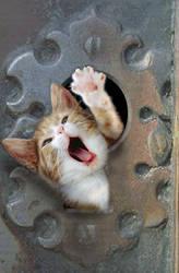 Kitty thru a keyhole