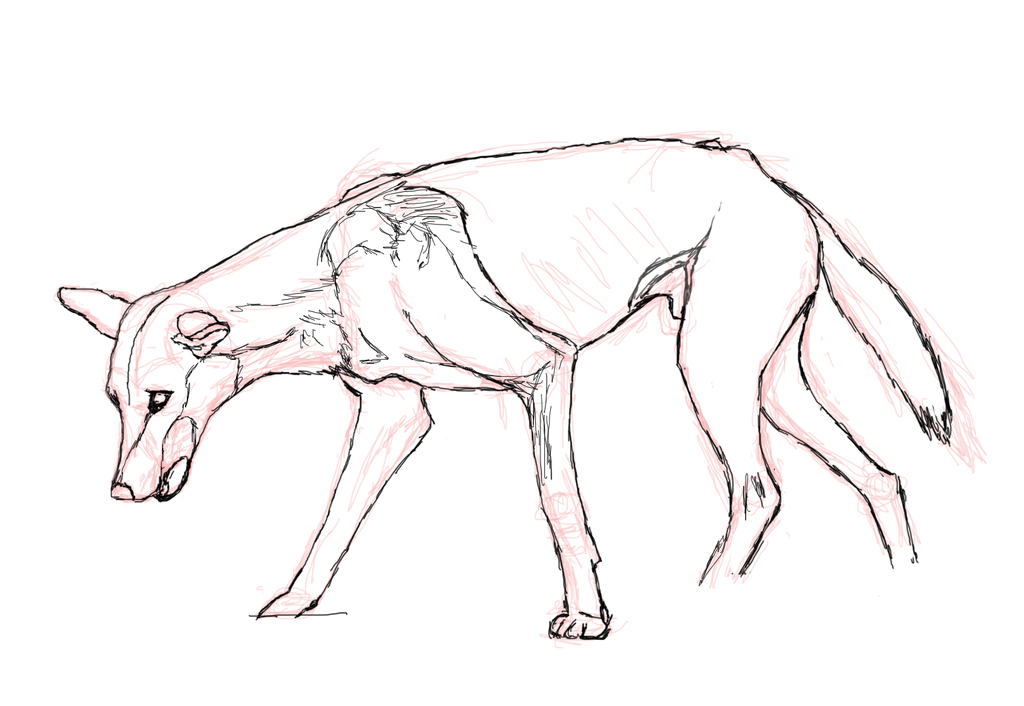 Zombie Dingo Reference WIP by amaryllis-bloom
