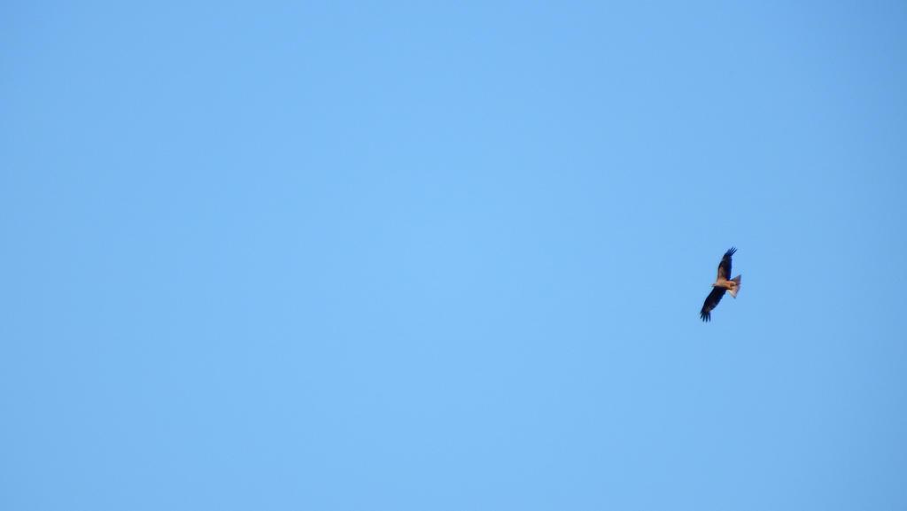 Aerial Ace by VikingTho
