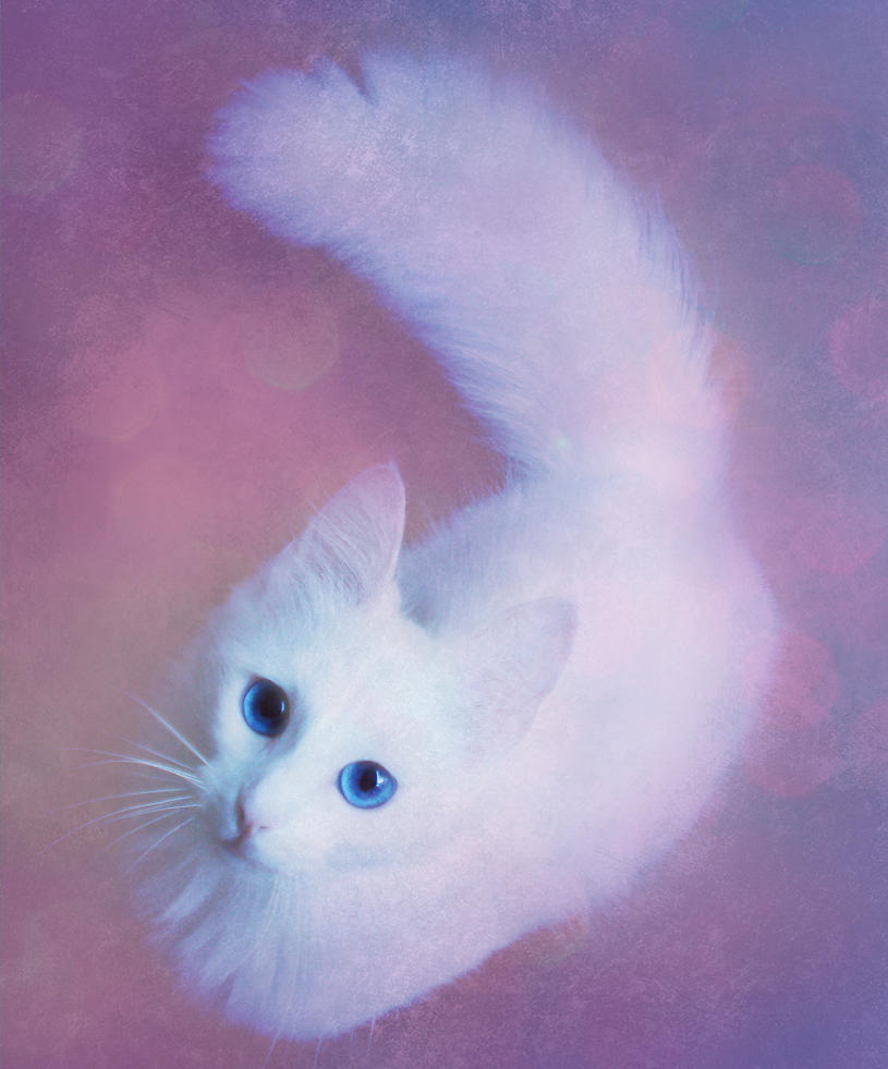 cute white cat by goldfl0wer on deviantart