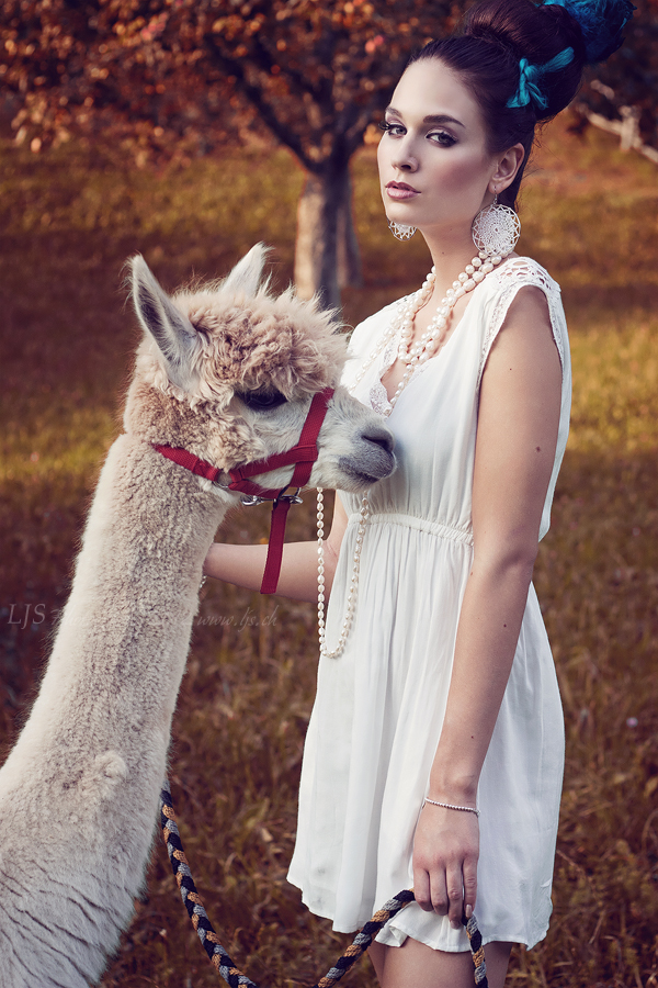 on the alpaca farm VI by LJS-Photo