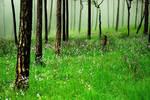 Flower meadow by porbital