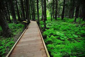 Green Path by porbital