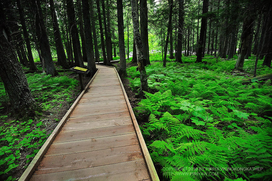green path into the - photo #33