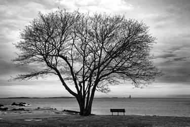 Big Tree by porbital