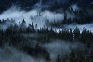Misty forest by porbital