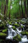 Lush creek by porbital
