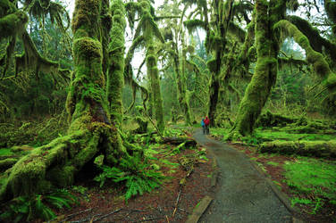 Hall of mosses by porbital