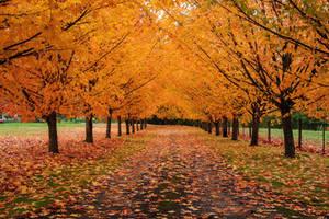 Autumn driveway by porbital