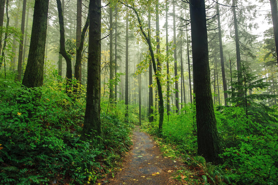 Rain forest by porbital