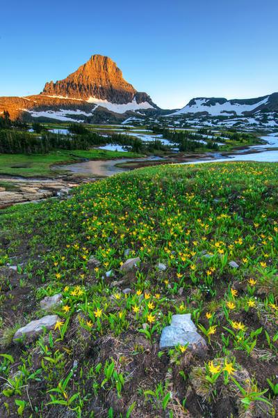 Wildflowers by porbital