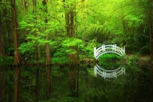 Swamp by porbital