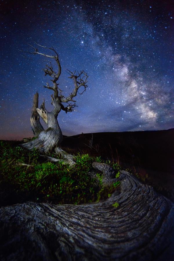 Night Spirit by porbital