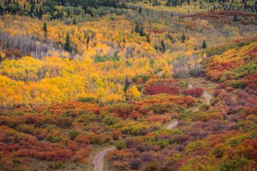 Nature palette by porbital