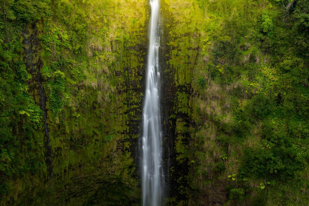 Jungle Drop by porbital