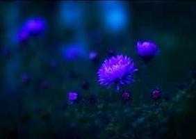 Untitled3 by violetkarma