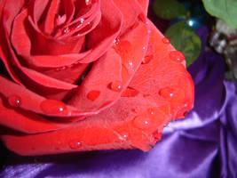 Rose Gardener by CookieBaker