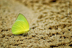 Leafy Butterfly by eyePhotograph