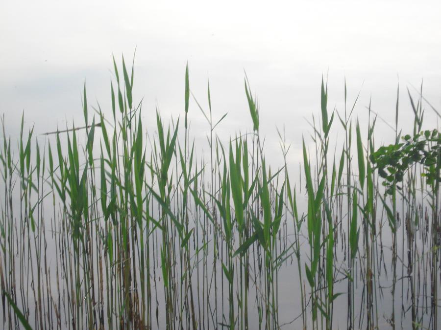 Water Grass By Tsukihanna On Deviantart
