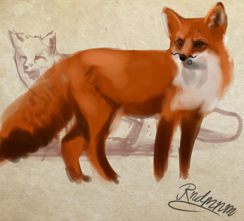 Foxes by rndmnm