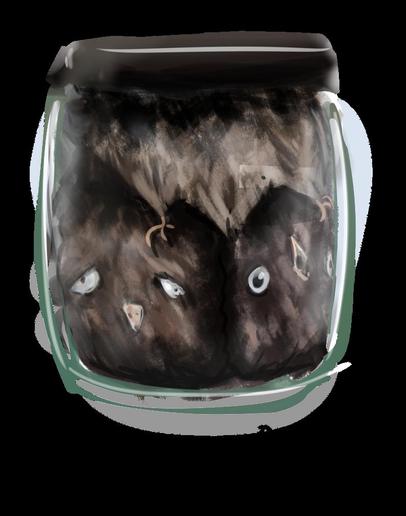Owls in a Jar by rndmnm