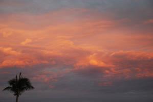 Palm Tree by BJOERLING