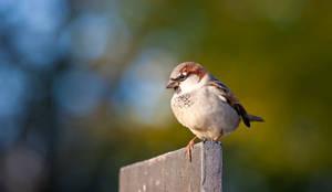 Birdy birdy by Alandil-Lenard