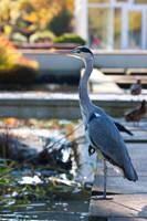 Moar Birdy by Alandil-Lenard
