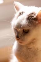Portrait of a Catlord by Alandil-Lenard