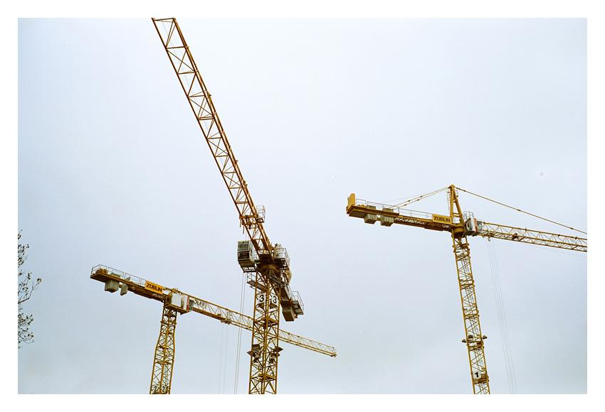 Cranes by Ikarisou