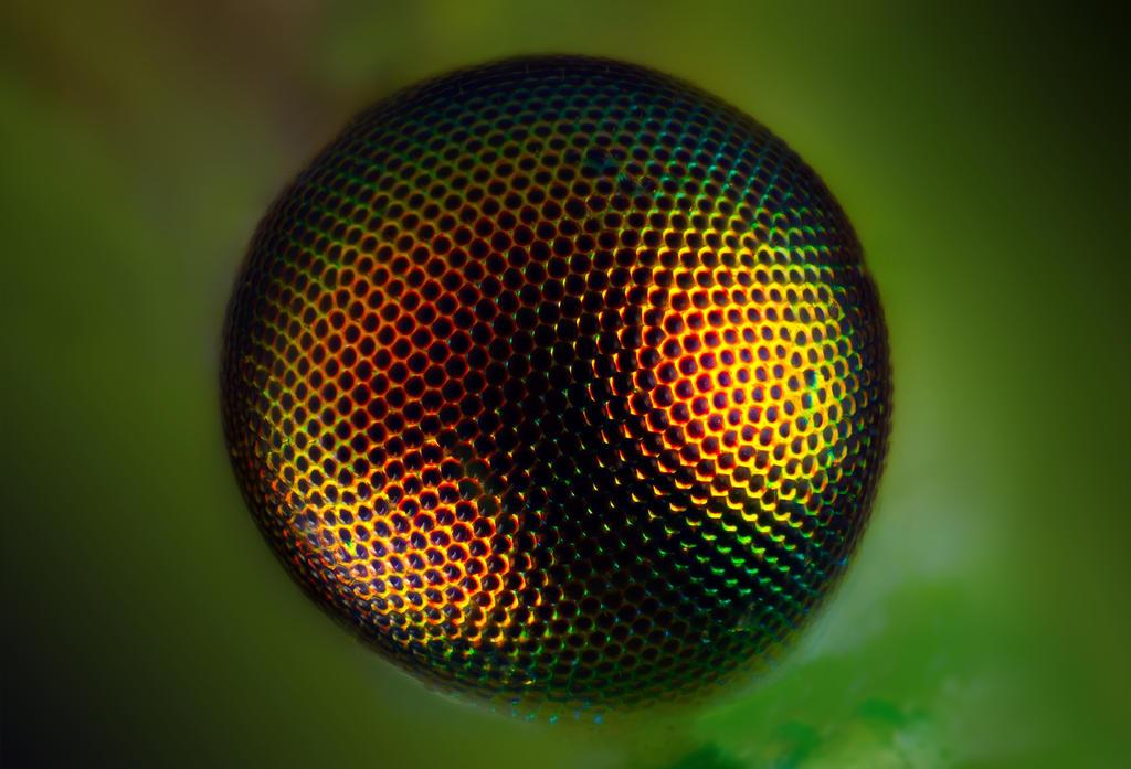 Ideal eye by dack99