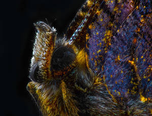 Fluffy butterfly