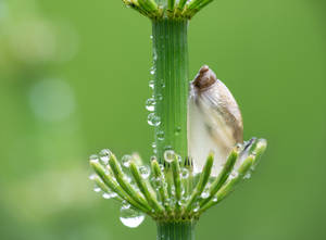 Horsetail with drops of warwe after the rain
