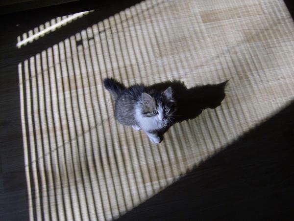 Kira, my kitten by Sierraa