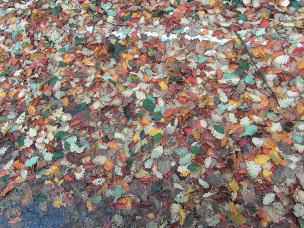 leaves by SINKandSHTAYN