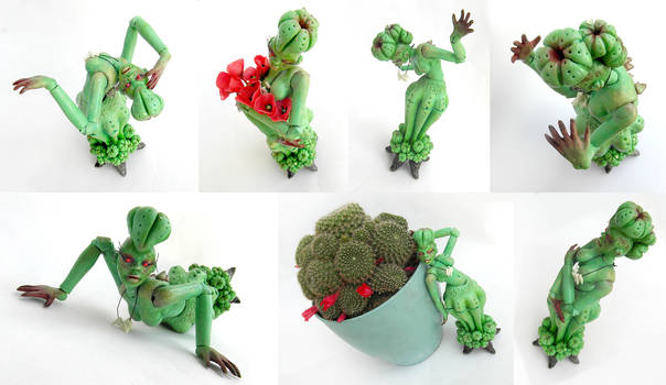 bdj lady cactus