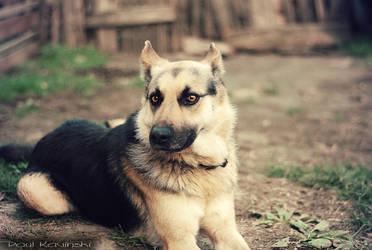 Me love my doggie